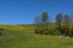 K1024_2.Mai 19-unterwegs nach Waldhausen im Strudengau
