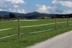 K1024_3.Mai 51-Pferde in CZ