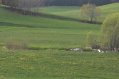 K1024_3.Mai 61-unterwegs in Richtung Liebenau
