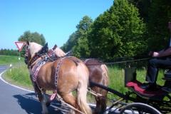 K1024_SO 07-Pferdekutsche bei Arzberg