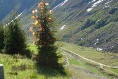 K1024_262-verkappter Weihnachtsbaum